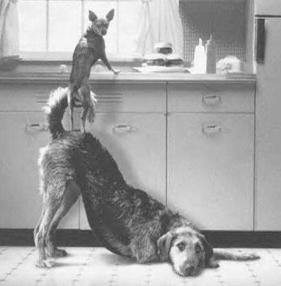I životinje vole.....zar ne? Teamwork